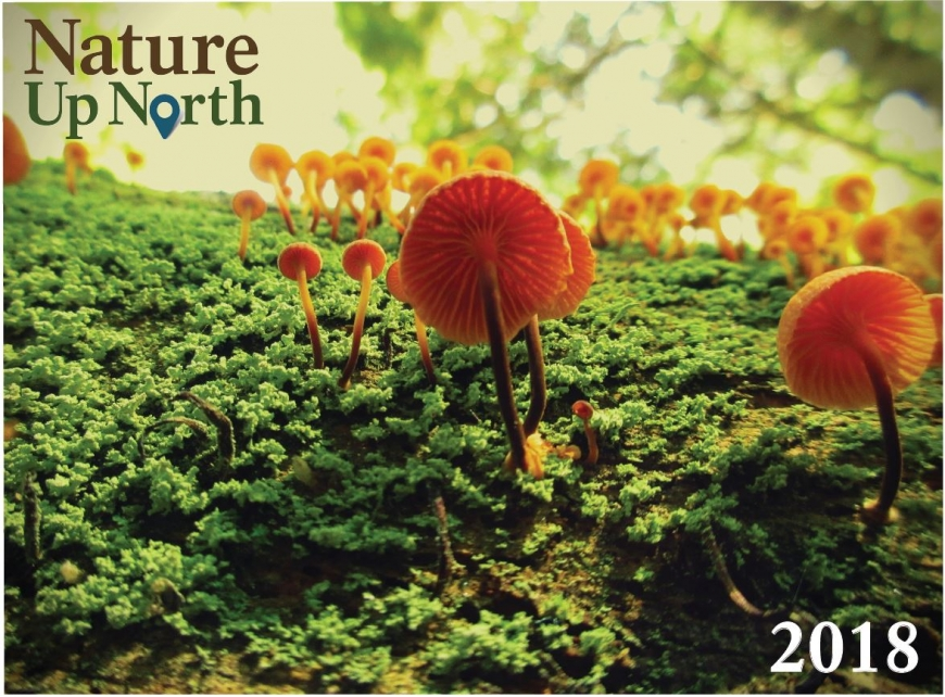 Calendar cover photo, featuring orange fungi on a mossy background.