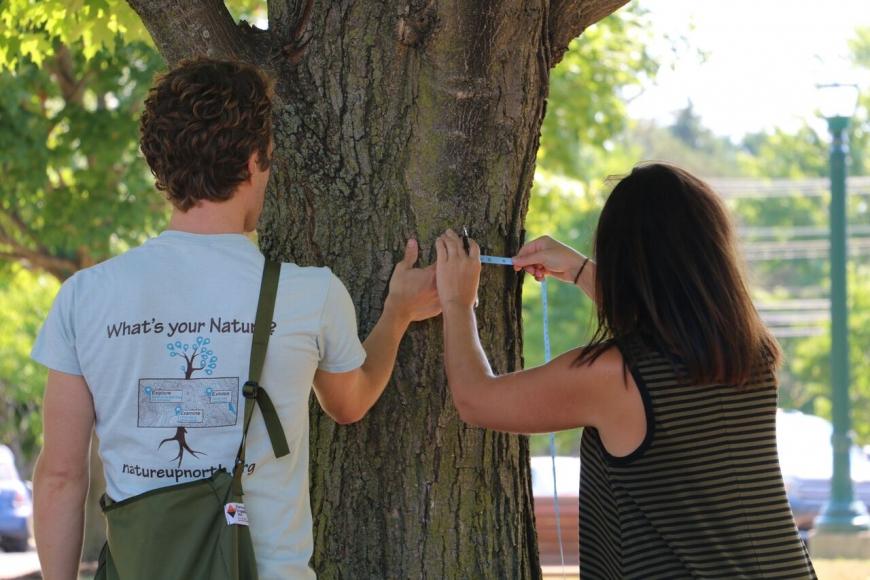 maple monitoring