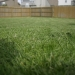 A mowed lawn, with focus on the cut grass in the foreground.