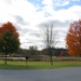 Maple trees at St. Lawrence University